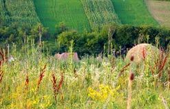 урожаи весны на холме Стоковые Изображения