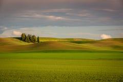 Урожаи весны Colorfull страны Palouse Стоковое Изображение
