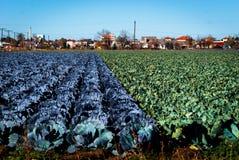 Урожаи в поле Стоковое Изображение RF
