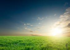 урожаи зеленеют над заходом солнца стоковая фотография