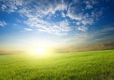 урожаи зеленеют над заходом солнца стоковая фотография rf