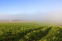 Урожаи и туман корма стоковое фото rf