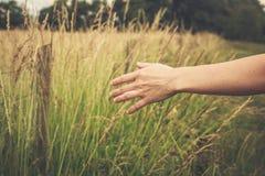 Урожаи руки касающие в поле Стоковое Изображение RF