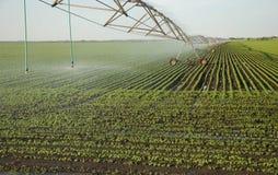 Урожаи системы опылительного орошения Стоковое фото RF