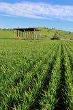 Урожаи Agriculure фермеров Стоковое Изображение
