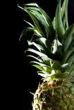 Урожай ананаса стоковое фото rf