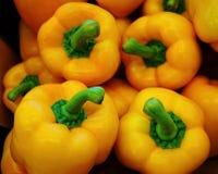 Урожай болгарского перца Стоковые Изображения RF