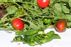 Урожай горячих перцев Стоковая Фотография