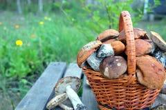 Урожай грибов в коричневом крупном плане корзины Стоковые Фотографии RF