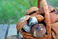 Урожай грибов в коричневом крупном плане корзины Стоковая Фотография RF