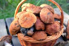 Урожай грибов в коричневом крупном плане корзины Стоковое Изображение RF