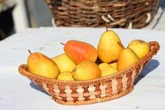Урожай груш Стоковые Фотографии RF