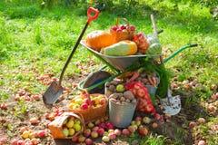 Урожай овощей в саде Стоковая Фотография