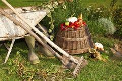 Урожай овощей в саде стоковое фото rf