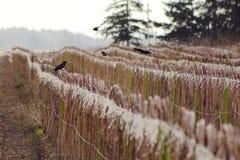 Урожай плодоовощ зимы Вашингтона Стоковые Изображения RF