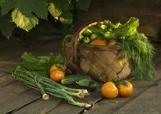 урожай сельский Стоковое Изображение RF