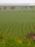урожай Стоковые Изображения RF