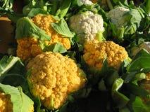 урожай cauliflower свежий Стоковые Фотографии RF