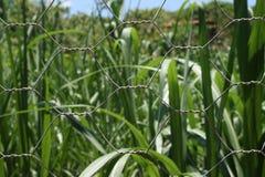 урожай chainlink Стоковая Фотография RF