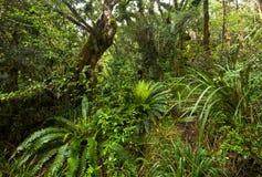 Уроженец Буш Новой Зеландии стоковая фотография rf