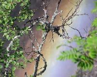 Уродство и красота Стоковые Фотографии RF
