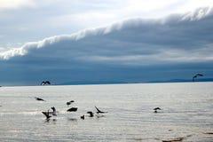 Урывать птиц Стоковое Изображение RF