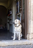 Усаженная собака стоковое фото rf