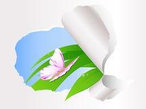 усаживание зеленого цвета травы бабочки Иллюстрация вектора