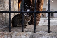 Усаживание кота на стене стоковые фотографии rf
