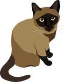усаживание кота сиамское Стоковое Фото