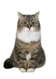 усаживание кота Стоковая Фотография RF