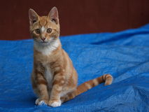 усаживание котенка милое Стоковые Фото