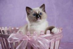 усаживание котенка смычка корзины розовое стоковая фотография