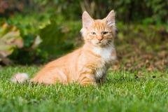 усаживание котенка травы Стоковые Изображения RF