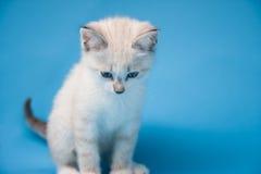 усаживание котенка Стоковые Изображения