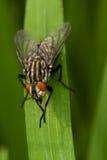 Усаживание мухы Стоковые Фото