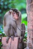 Усаживание обезьяны стоковая фотография