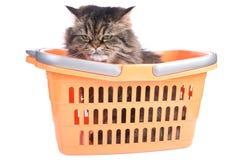 усаживание покупкы кота корзины Стоковые Изображения