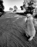 усаживание собаки Стоковые Фото