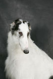 усаживание собаки стоковое изображение rf