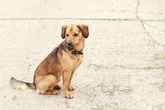 усаживание собаки Стоковое фото RF