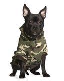 усаживание собаки crossbreed камуфлирования Стоковые Фото