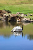 усаживание утеса гольфа курса птицы Стоковое Изображение