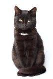 Усаживание черного кота стоковая фотография