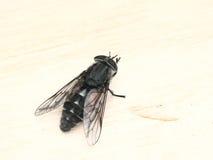 усаживание gadfly доски Стоковое фото RF