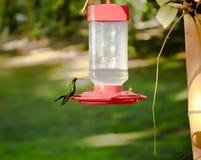 усаживание hummingbird фидера птицы Стоковое фото RF