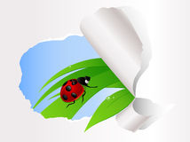 усаживание ladybird зеленого цвета травы Бесплатная Иллюстрация