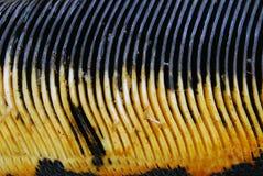 усатый кит Стоковые Фото