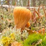 Усеченные грибы коралла клуба съестные оранжевые Стоковое Изображение