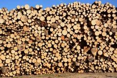 Усеченные деревья Стоковые Фотографии RF